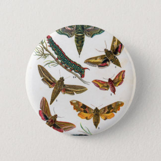 European Butterfly 6 Cm Round Badge