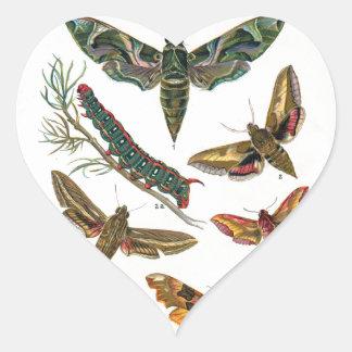 European Butterfly Heart Sticker