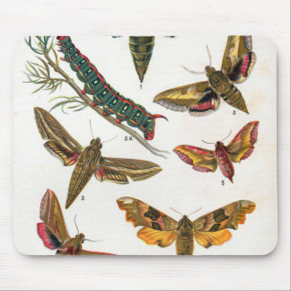 European Butterfly Mouse Pad