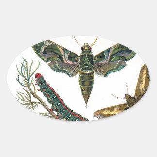 European Butterfly Oval Sticker
