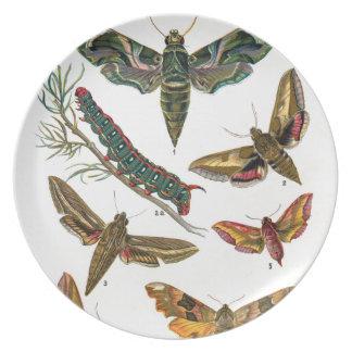 European Butterfly Plate