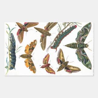 European Butterfly Rectangular Sticker