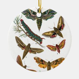European Butterfly Round Ceramic Decoration