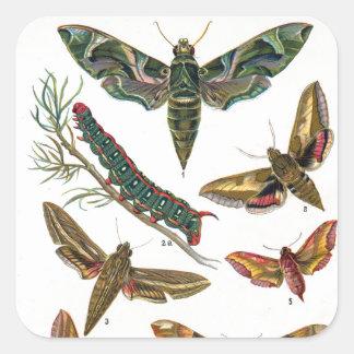 European Butterfly Square Sticker