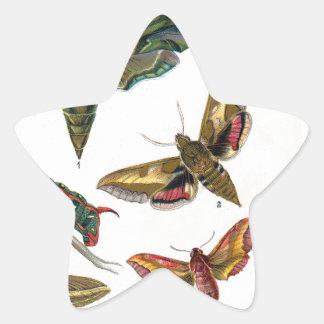 European Butterfly Star Sticker