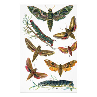 European Butterfly Stationery