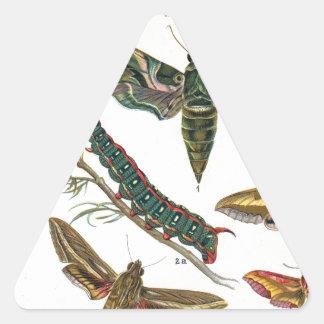 European Butterfly Triangle Sticker