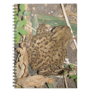 European Common Toad Notebook