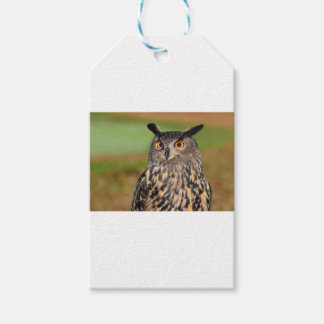 European Eagle Owl Gift Tags