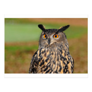 European Eagle Owl Postcard