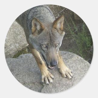 European grey wolf classic round sticker
