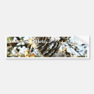 European Larch Cones Bumper Sticker