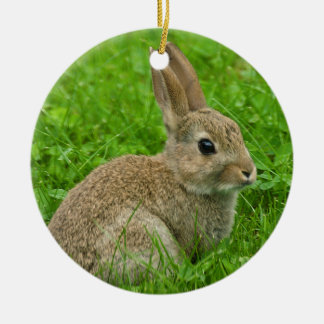 European-rabbit image for Circle Ornament