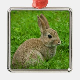 European-rabbit image for Premium Square Ornament