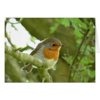"""European Robin-Bird Northumberland England"" Card"