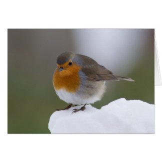 European Robin in snow cards