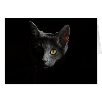 European Shorthair | Black Cat | Cat Portrait Card