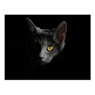 European Shorthair | Black Cat | Cat Portrait Postcard
