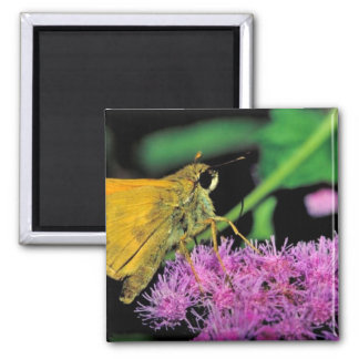 European skipper butterfly on Mistflower Magnet