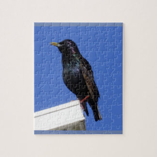 European Starling Bird Puzzle