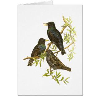 European Starling Card