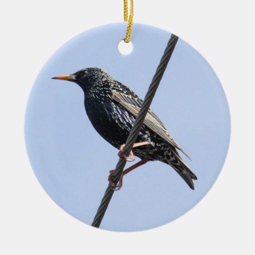 European Starling Christmas Ornament