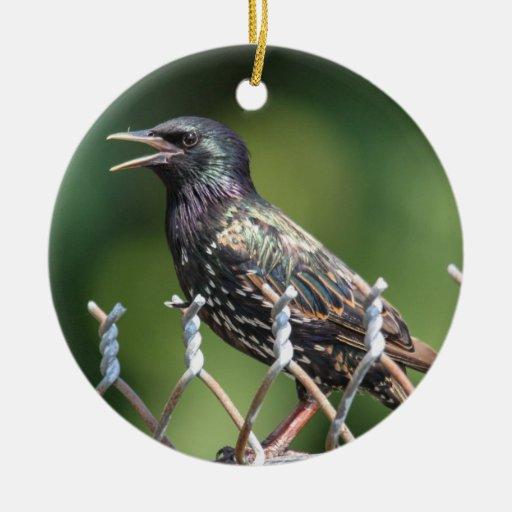 European Starling Christmas Tree Ornament