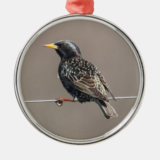 European Starling Ornaments
