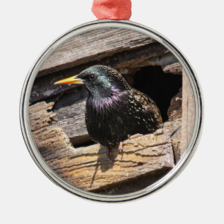 European Starling Christmas Tree Ornaments