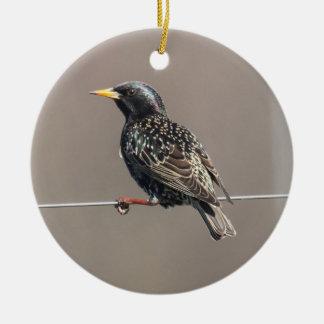 European Starling Round Ceramic Decoration