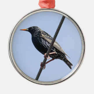 European Starling Silver-Colored Round Decoration