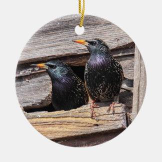 European Starlings Round Ceramic Decoration