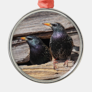 European Starlings Silver-Colored Round Decoration