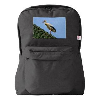 European white stork, ciconia backpack