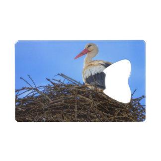 European white stork, ciconia, in the nest