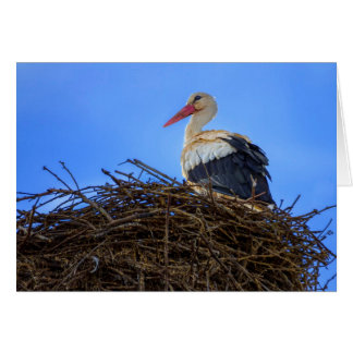 European white stork, ciconia, in the nest card