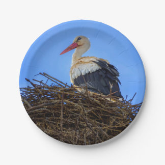 European white stork, ciconia, in the nest paper plate