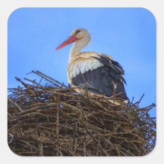 European white stork, ciconia, in the nest square sticker