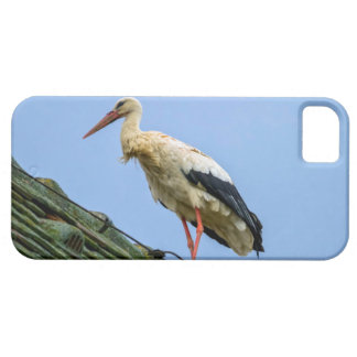 European white stork, ciconia iPhone 5 covers
