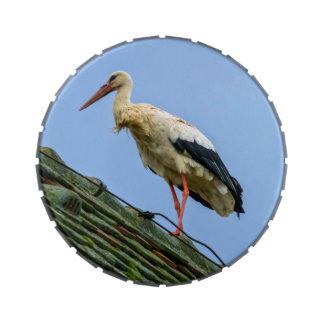 European white stork, ciconia jelly belly candy tin
