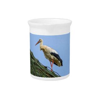 European white stork, ciconia pitcher