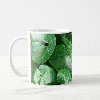 European Wild Ginger Glossy Leaves Close Up Photo Coffee Mug
