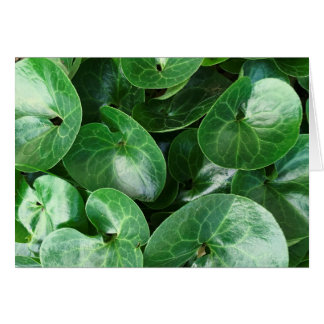 European Wild Ginger Plant Glossy Leaves Close Up Card