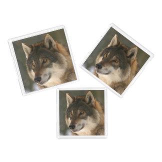 European Wolf Acrylic Tray