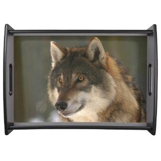 European Wolf Serving Tray