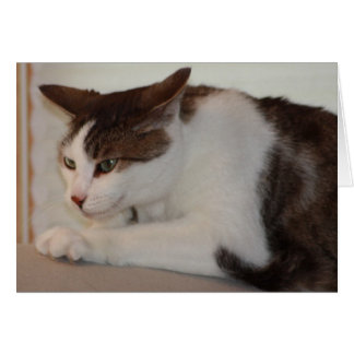 Even a Good Cat can have a Bad Day! Greeting Card