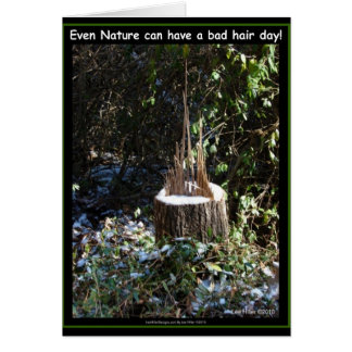 Even Nature Can Have A Bad Hair Day! Gifts Apparel Greeting Card