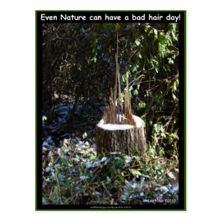 Even Nature Can Have A Bad Hair Day! Gifts Apparel Postcard