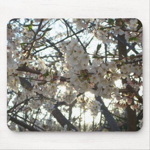 Evening Cherry Blossoms II Mousepad
