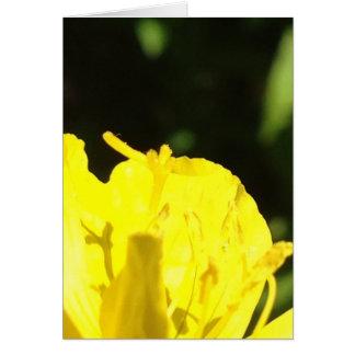 Evening Primrose Blank Greeting Card